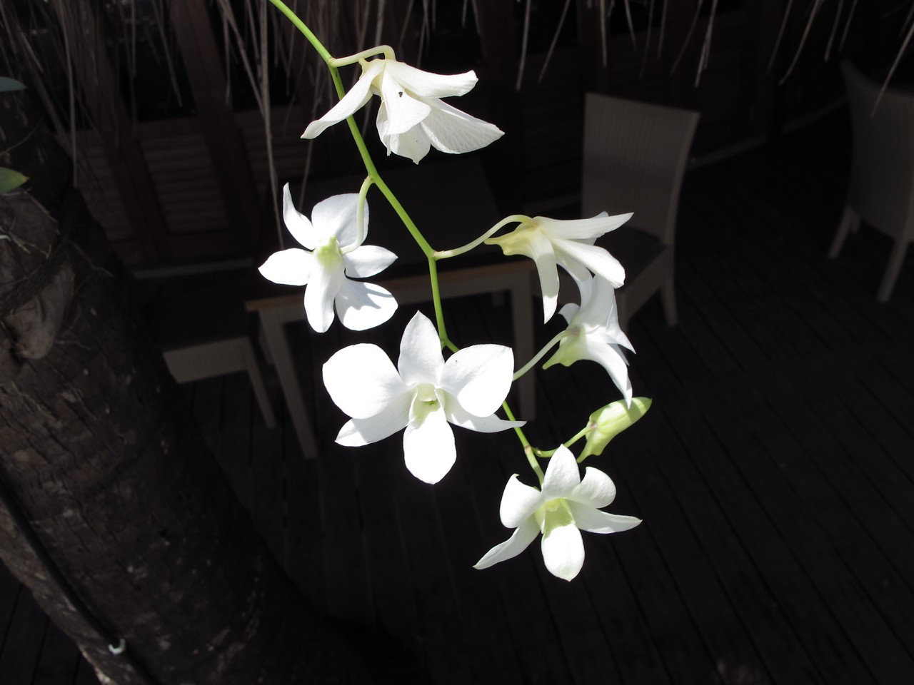 The island environment makes it a perfect place to grow orchids as well.