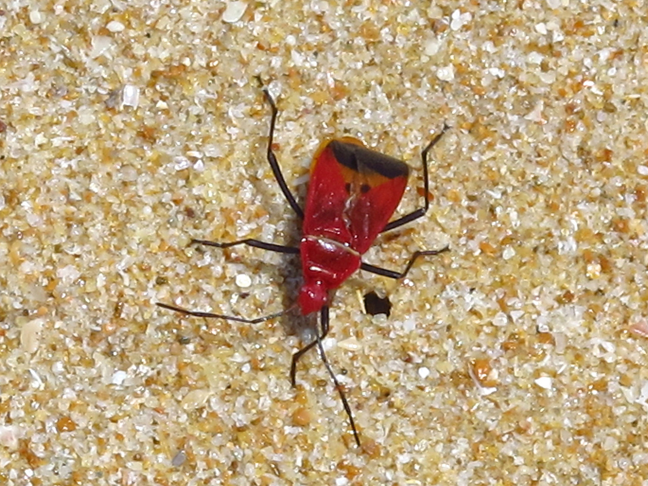 There's a few insects as well, although the almost constant ocean breezes, keep insects to a minimum.
